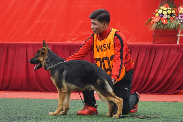 30 chú chó Becgie Đức khoe hình thể ở Hà Nội - 3