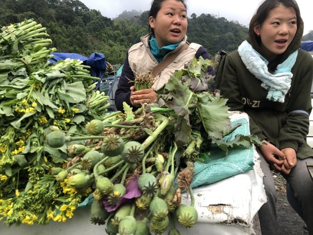 Cây anh túc được bày bán công khai nơi chợ biên giới Lào - Việt - 4