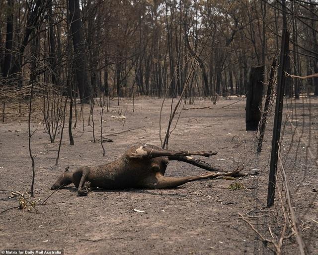 """400 triệu động vật bị thiêu hủy, Australia """"gồng mình"""" chiến đấu với cháy rừng - 1"""
