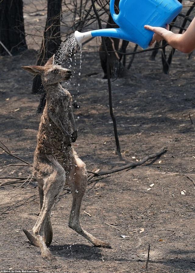 """400 triệu động vật bị thiêu hủy, Australia """"gồng mình"""" chiến đấu với cháy rừng - 3"""
