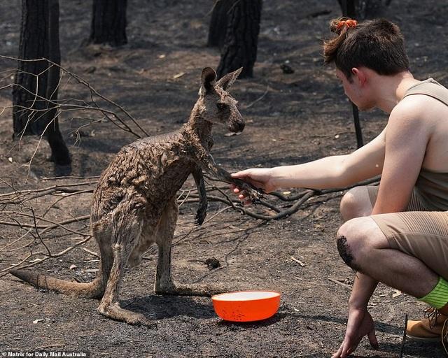 """400 triệu động vật bị thiêu hủy, Australia """"gồng mình"""" chiến đấu với cháy rừng - 5"""
