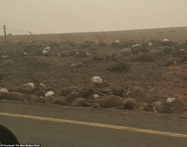 """400 triệu động vật bị thiêu hủy, Australia """"gồng mình"""" chiến đấu với cháy rừng - 2"""