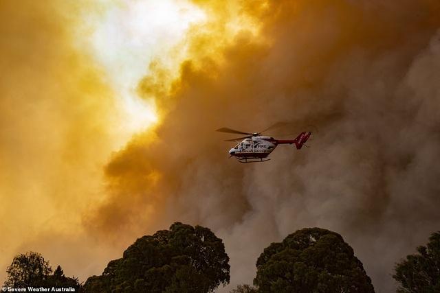 """400 triệu động vật bị thiêu hủy, Australia """"gồng mình"""" chiến đấu với cháy rừng - 9"""