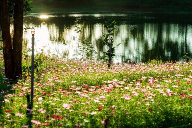 """Du khách mê mẩn vẻ đẹp vườn hoa tam giác mạch trên """"phố núi"""" - 9"""