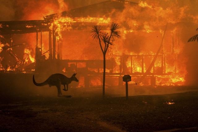 """400 triệu động vật bị thiêu hủy, Australia """"gồng mình"""" chiến đấu với cháy rừng - 14"""