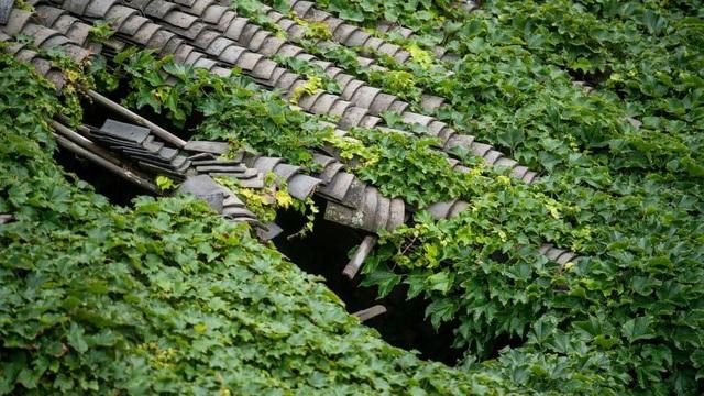 """Ngôi làng bỏ hoang bất ngờ gây """"sốt"""" bởi những nhà cây đẹp mê mẩn như cổ tích - 5"""