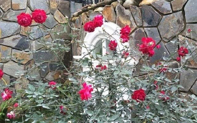"""Nhà vườn hoành tráng 4 mùa rợp bóng cây xanh của """"Nam Tào"""" Xuân Bắc - 12"""
