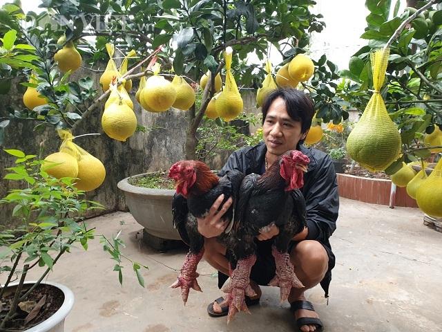 Ninh Bình: Nuôi gà tiến vua, trồng bưởi cảnh bán Tết mà ăn Tết to - 1