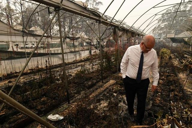"""400 triệu động vật bị thiêu hủy, Australia """"gồng mình"""" chiến đấu với cháy rừng - 7"""