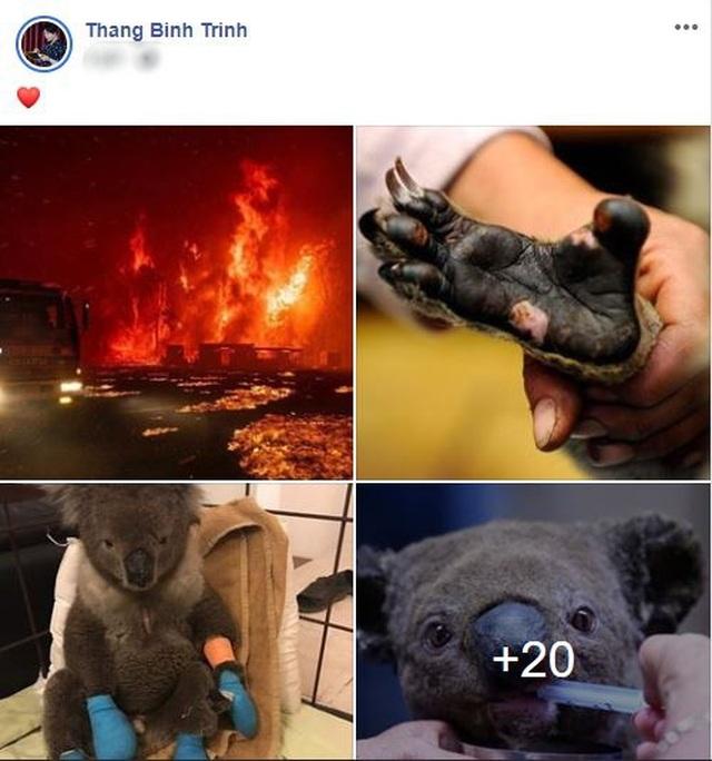 Ám ảnh đại thảm hoạ cháy rừng, dàn sao Việt nguyện cầu cho nước Úc - 9