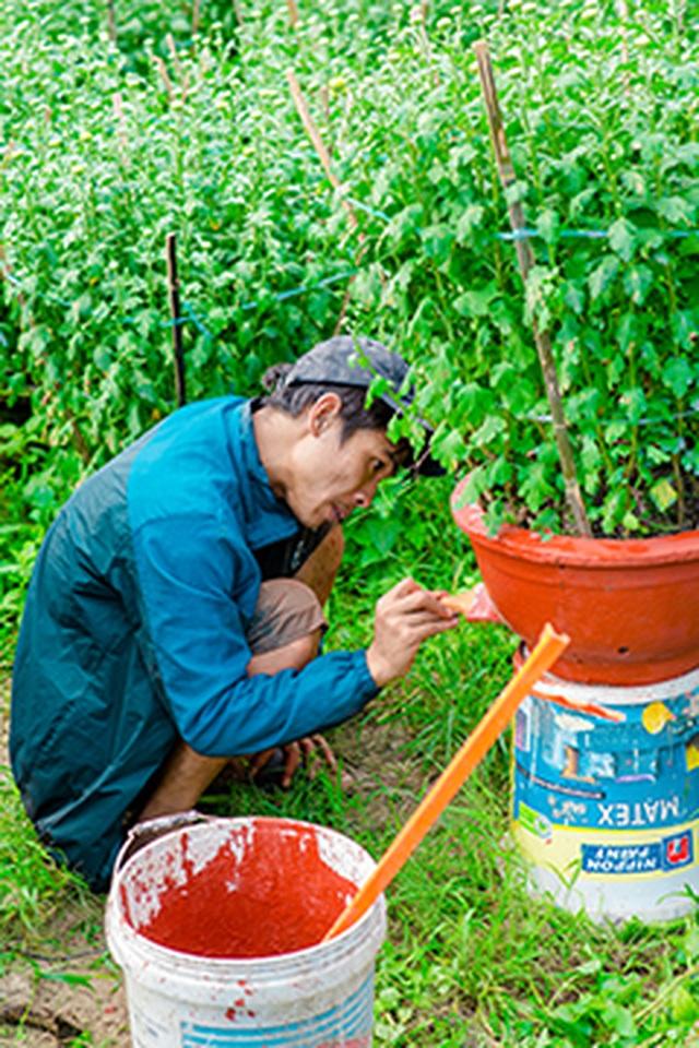 Ngắt nụ hoa cúc, sinh viên Đà Nẵng kiếm tiền triệu mùa Tết - 6