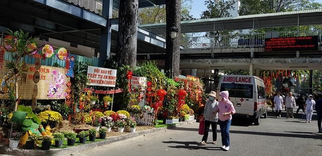 Mê mẩn với đường hoa ngập tràn sắc xuân giữa bệnh viện - 10
