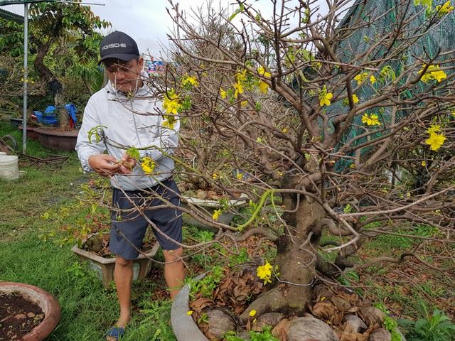 Đà Nẵng: Làng cho thuê mai tất bật vào vụ Tết - 2