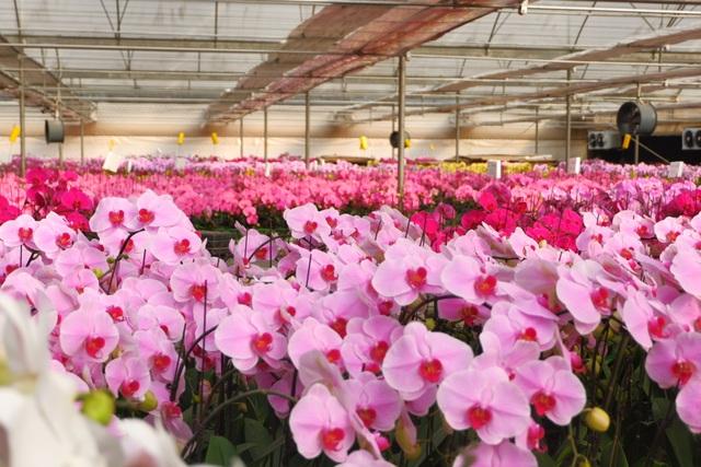 Hành trình hơn một thập kỷ với khát vọng đưa hoa Việt Nam vươn tầm thế giới của các nhà khoa học - 8