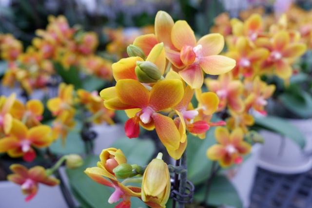 Hành trình hơn một thập kỷ với khát vọng đưa hoa Việt Nam vươn tầm thế giới của các nhà khoa học - 11