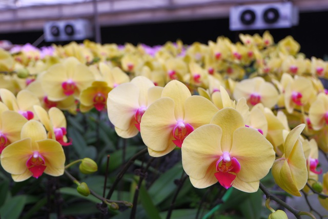 Hành trình hơn một thập kỷ với khát vọng đưa hoa Việt Nam vươn tầm thế giới của các nhà khoa học - 9