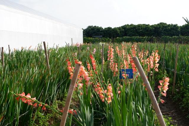 Hành trình hơn một thập kỷ với khát vọng đưa hoa Việt Nam vươn tầm thế giới của các nhà khoa học - 6