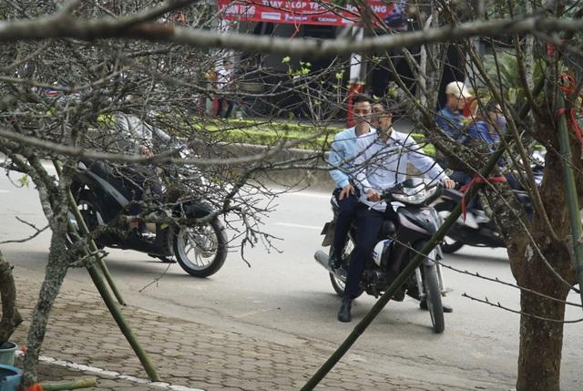 Mận rừng trắng tinh khôi xuống Thủ đô đón Tết - 12