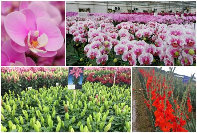 Hành trình hơn một thập kỷ với khát vọng đưa hoa Việt Nam vươn tầm thế giới của các nhà khoa học - 1