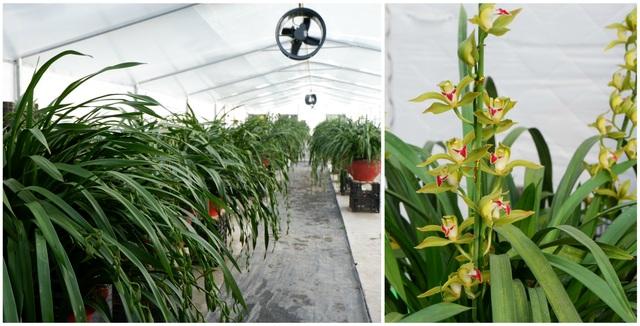 Hành trình hơn một thập kỷ với khát vọng đưa hoa Việt Nam vươn tầm thế giới của các nhà khoa học - 3