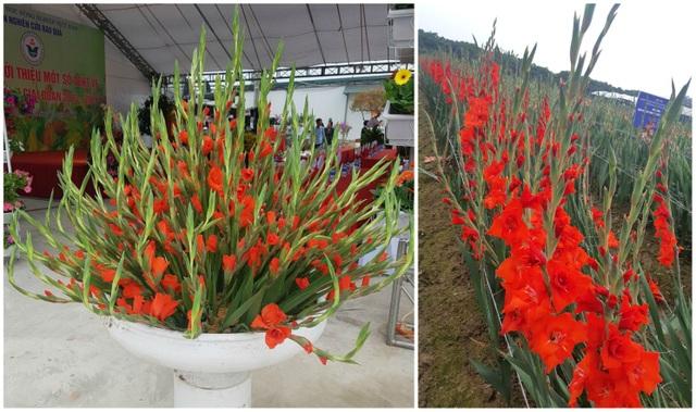 Hành trình hơn một thập kỷ với khát vọng đưa hoa Việt Nam vươn tầm thế giới của các nhà khoa học - 12