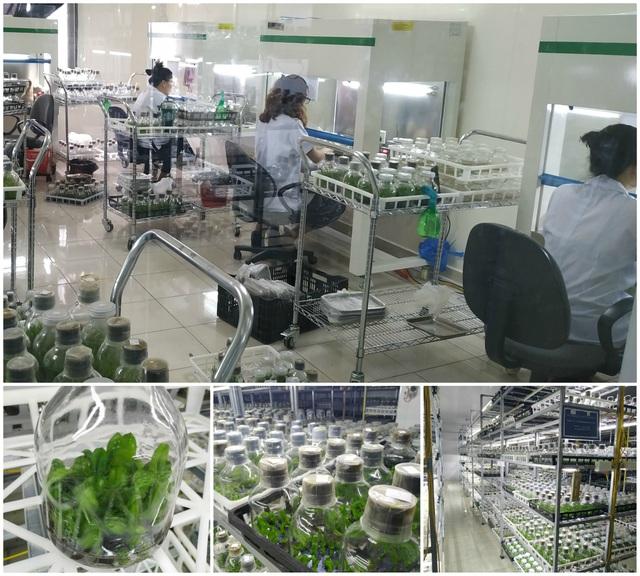 Hành trình hơn một thập kỷ với khát vọng đưa hoa Việt Nam vươn tầm thế giới của các nhà khoa học - 7