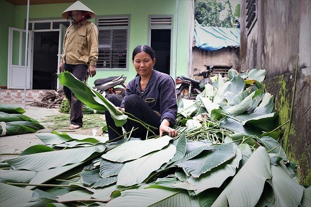 Hà Tĩnh: Thủ phủ lá dong Đức Thọ hối hả vào vụ Tết - 4