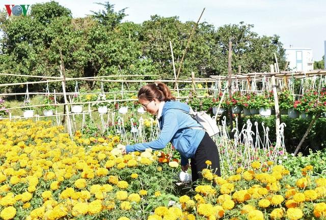 Làng hoa Phó Thọ - Bà Bộ (Cần Thơ) tất bật làm hoa Tết - 11