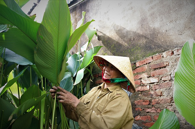 Hà Tĩnh: Thủ phủ lá dong Đức Thọ hối hả vào vụ Tết - 7