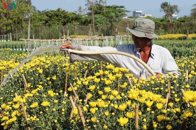 Làng hoa Phó Thọ - Bà Bộ (Cần Thơ) tất bật làm hoa Tết - 2