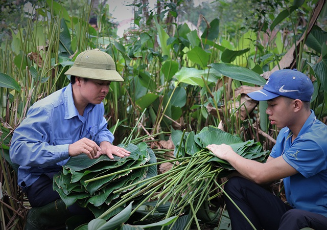 Hà Tĩnh: Thủ phủ lá dong Đức Thọ hối hả vào vụ Tết - 9