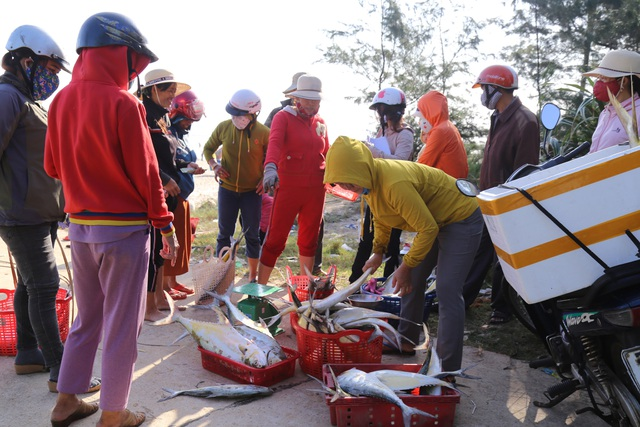 Quảng Trị:  Ngư dân thu hàng chục triệu đồng mỗi chuyến biển nhờ trúng cá bè - 3