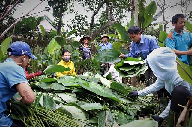 Hà Tĩnh: Thủ phủ lá dong Đức Thọ hối hả vào vụ Tết - 13