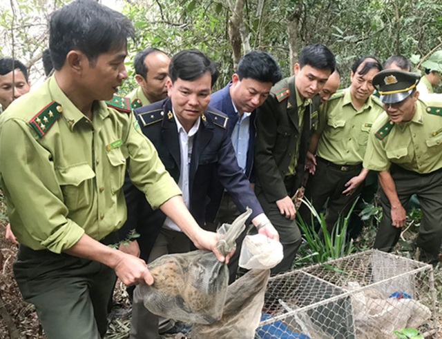 Giải cứu 12 cá thể cầy suýt lên bàn nhậu - 1