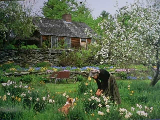 Sửng sốt với ngôi nhà hoa hồng đẹp như bước ra từ truyện cổ tích của cụ bà 92 tuổi - 1