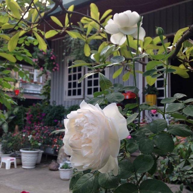 Cặp vợ chồng ở Hà Giang tự xây ngôi nhà hoa hồng đẹp như mơ giữa phố núi - 12