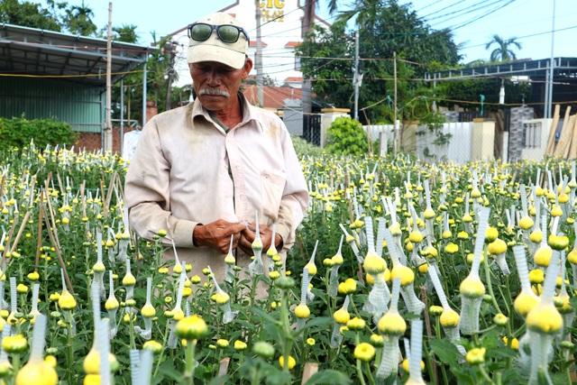 Hội An: Hoa, cây cảnh chơi Tết tăng giá  - 4