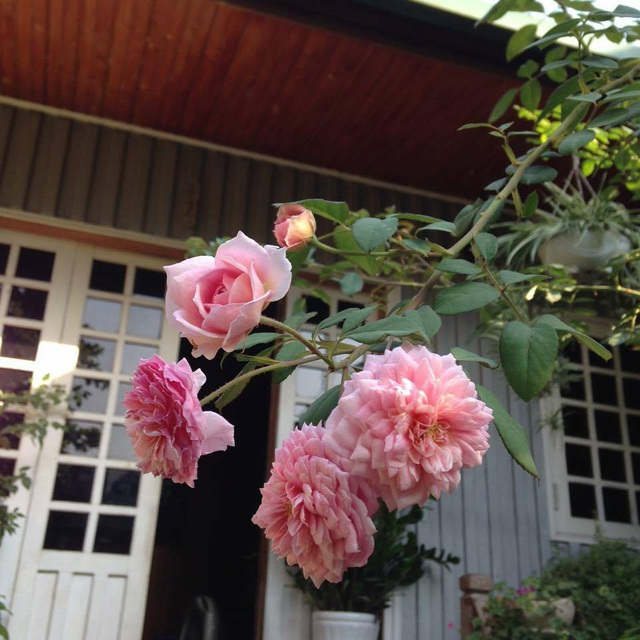 Cặp vợ chồng ở Hà Giang tự xây ngôi nhà hoa hồng đẹp như mơ giữa phố núi - 10
