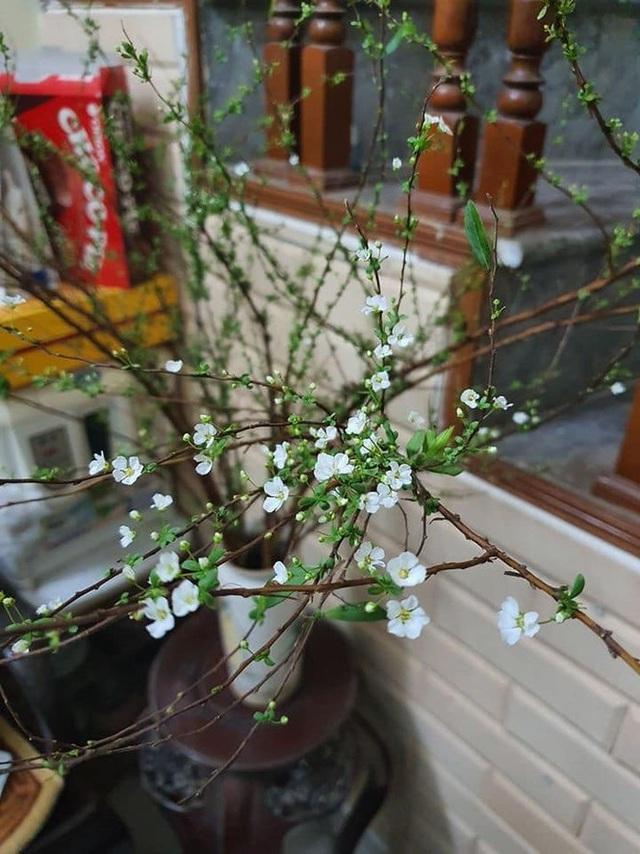 Cận Tết, dân Hà Nội đổ xô mua hoa lạ Trung Quốc - 2
