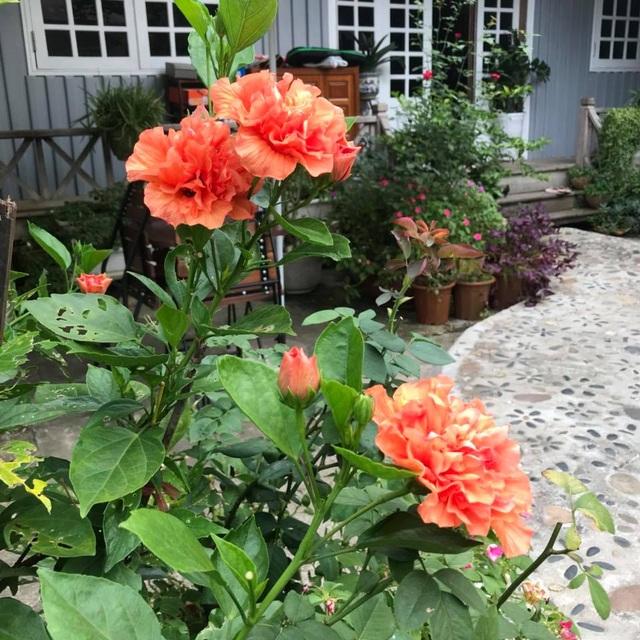 Cặp vợ chồng ở Hà Giang tự xây ngôi nhà hoa hồng đẹp như mơ giữa phố núi - 9