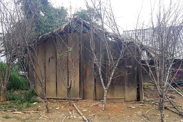 Đổ xô lên săn đào đá giá hàng chục triệu ở vùng biên Nghệ An  - 1