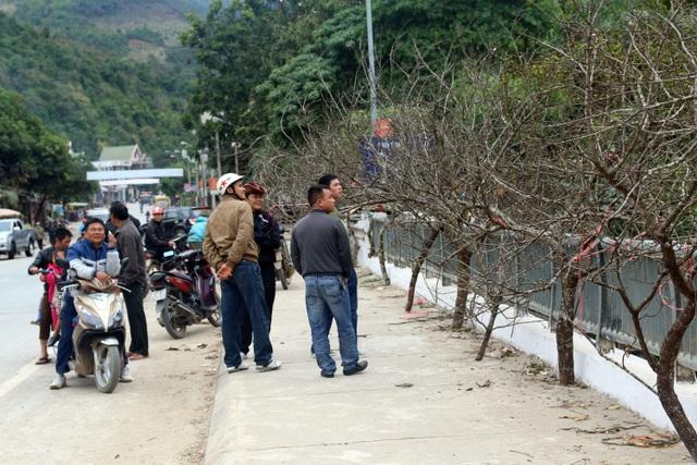 Đổ xô lên săn đào đá giá hàng chục triệu ở vùng biên Nghệ An  - 13