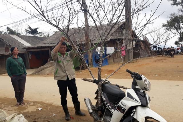 Đổ xô lên săn đào đá giá hàng chục triệu ở vùng biên Nghệ An  - 2