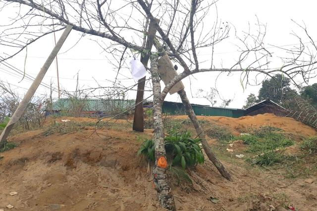 Đổ xô lên săn đào đá giá hàng chục triệu ở vùng biên Nghệ An  - 3