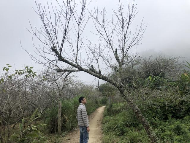 Đổ xô lên săn đào đá giá hàng chục triệu ở vùng biên Nghệ An  - 11