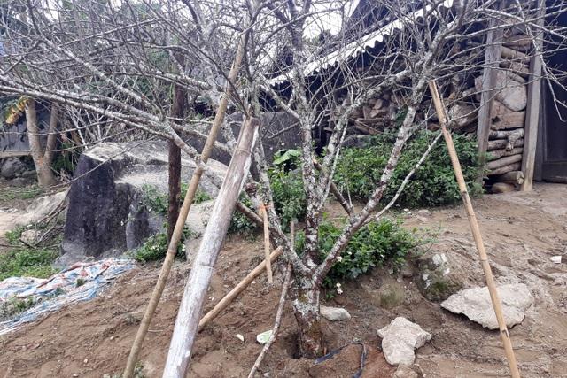Đổ xô lên săn đào đá giá hàng chục triệu ở vùng biên Nghệ An  - 6