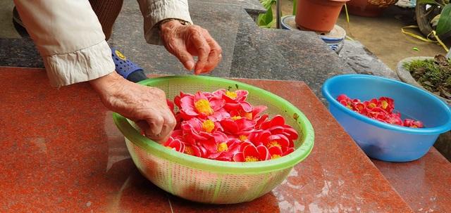 Về làng hoa Đồng Dụ ngắm cây hải đường cổ thụ hơn trăm tuổi - 8
