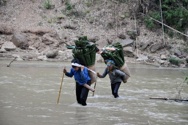 Thanh Hoá: Cận Tết, nhiều cụ bà gần 70 tuổi vẫn băng rừng, lội suối hái lá dong - 15