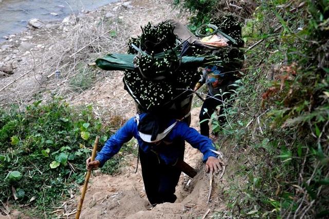 Thanh Hoá: Cận Tết, nhiều cụ bà gần 70 tuổi vẫn băng rừng, lội suối hái lá dong - 1