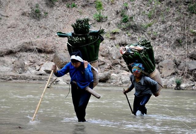 Thanh Hoá: Cận Tết, nhiều cụ bà gần 70 tuổi vẫn băng rừng, lội suối hái lá dong - 3